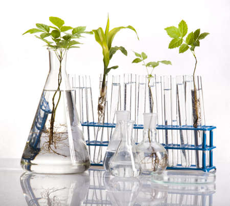 Laboratory glassware containing plants in laboratory  photo