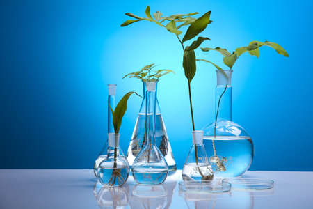 pipeptte: Floral science in blue laboratory  Stock Photo