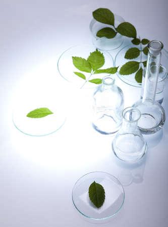 pipeptte: Laboratory glassware containing plants in laboratory