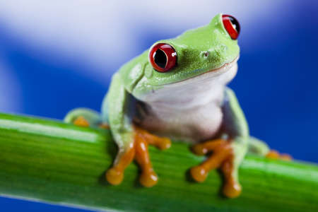 big eyes: Frog and blue sky