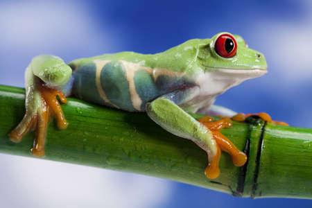 Green frog Stock Photo - 14217797