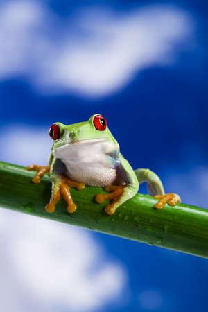 crazy frog: Frog and blue sky