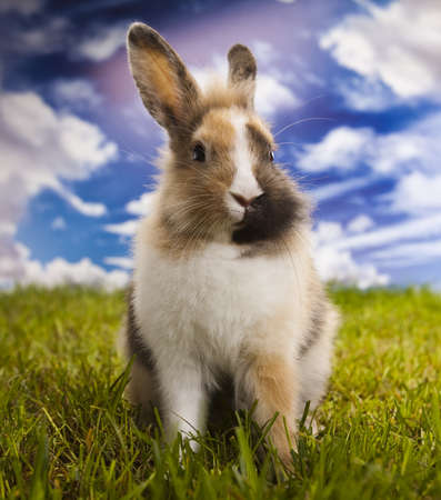 Bunny in grass Stock Photo - 15131126
