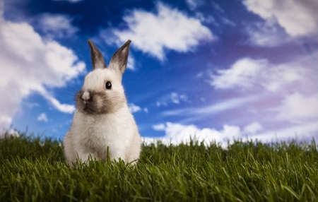 Bunny in grass  Stock Photo