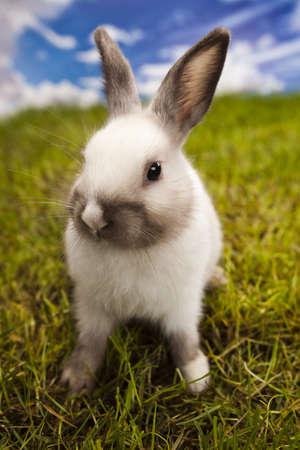 furry animals: Primavera bebé conejito y la hierba verde