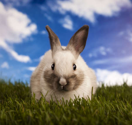 Spring baby bunny and green grass photo