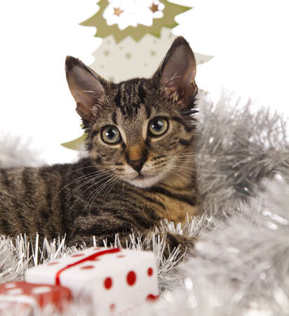 Christmas cat and gift  photo