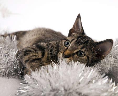 Cat christmas photo