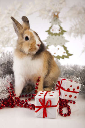 bunny xmas: Christmas bunny
