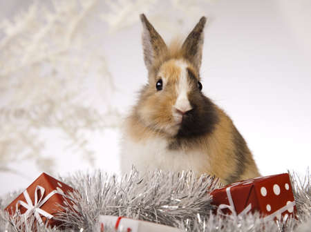 Christmas bunny photo
