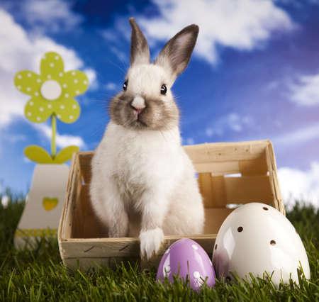 Baby bunny Standard-Bild