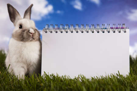 Copyspace blank paper and bunny photo