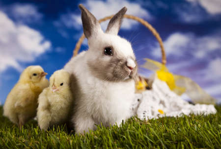 Bunny and chick and green grass photo