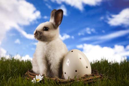 hopping: Curious Bunny Stock Photo