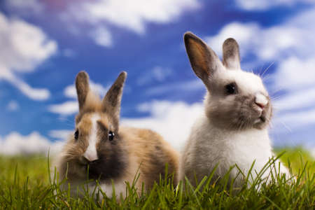 Bunny, rabbit and green grass photo