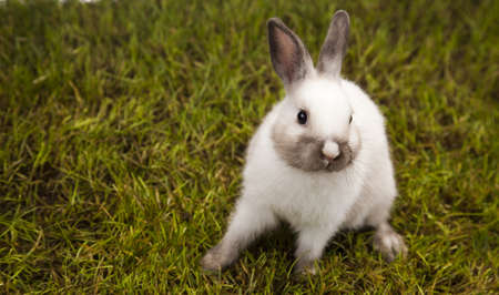 hopping: Bunny in grass  Stock Photo