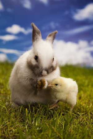 Chick in bunny photo