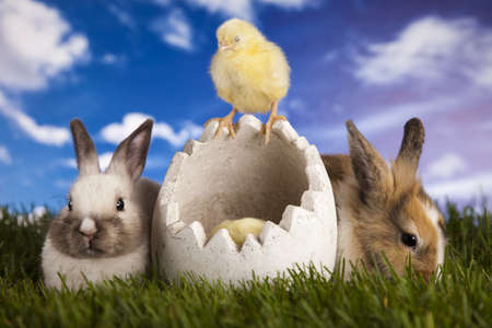 Easter, bunny and chick on green grass  photo