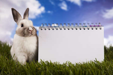 hopping: Copyspace blank paper and bunny Stock Photo