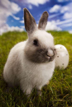 Bunny in grass  photo