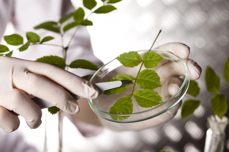 Plant in a test tube in hands of the scientist