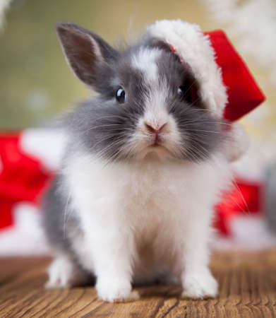 Holiday Christmas bunny in Santa hat on gift box background