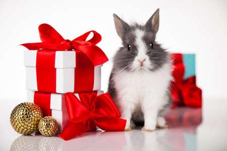 面白いウサギと冬の装飾、クリスマスの背景
