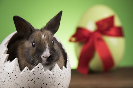 Little cute baby rabbit and easter Reklamní fotografie