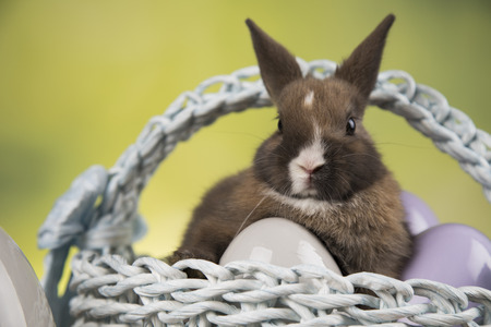 Little Bunny with basket background