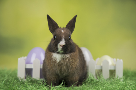 Bunny, rabbit and easter eggs on green background