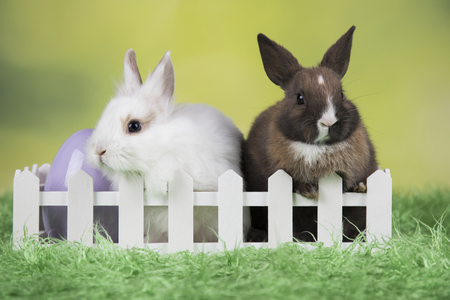 Little cute baby rabbit and easter eggs