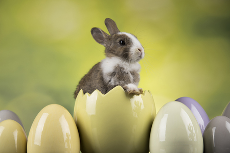 Happy easter, Baby bunny, rabbit and egg on green background