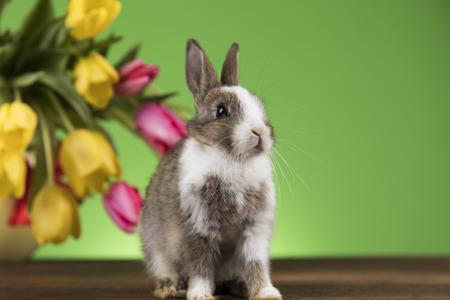 Baby bunny and egg on tulip flowers background Reklamní fotografie