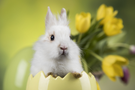 Easter holiday, with eggs, flowers and bunny
