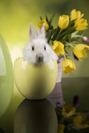 Spring baby bunny, tulip flower background Reklamní fotografie