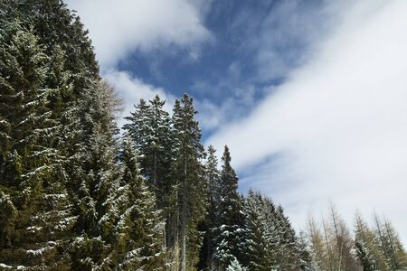 Snow covered fir trees against blue sky on cold winter Stock Photo