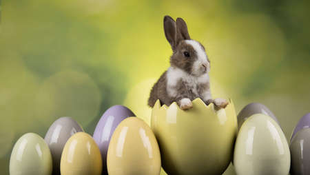 Little bunny, happy easter background