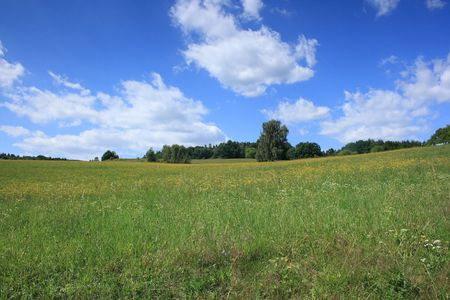 Summer green grassland with sky and forest  Stock Photo