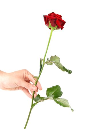 Hand giving single red rose