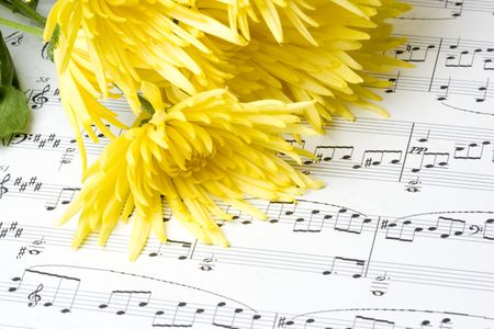 Yellow chrysanthemum blooms laying on sheet music photo