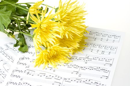 Yellow chrysanthemum blooms laying on sheet music photo