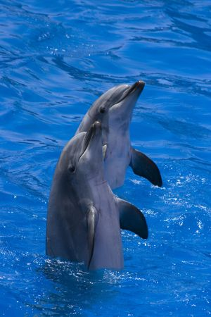 Two happy dolphins in a seaworld