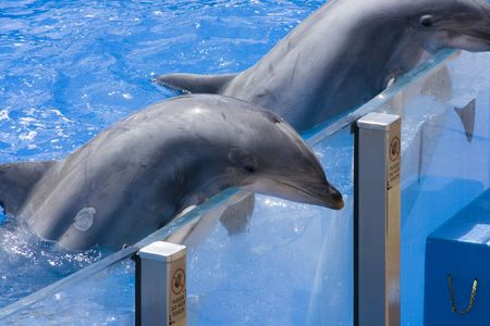Two happy dolphins in a seaworld photo
