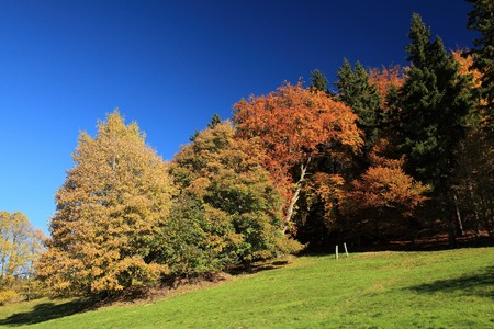 Yellow and green autumn tree in Krusne hory (Ore Mountains) Stock Photo
