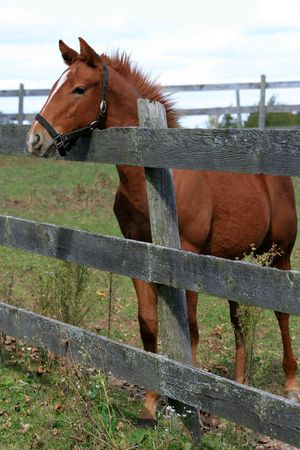 A young horse stands at the paddock fence.