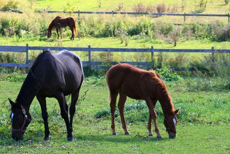 A mare and foal graze in the foreground.