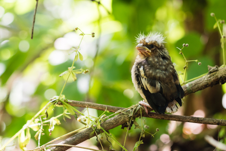 Young bird of the cuckoo sitting on a branch in a forest. Stock Photo