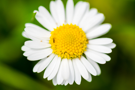 Macro photography of small white flower taken with shallow depth of field on green background.