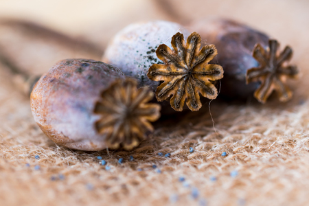 Macro photography of poppy heads and poppy seeds on textile rustic background. Stock Photo