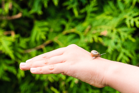 Small snail crawling on hand of young girl. Nice closeup shot with selective focus, smooth background.